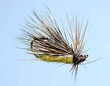 DANCING CADDIS